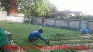 รับจัดสวน ปูหญ้า ปลูกต้นไม้